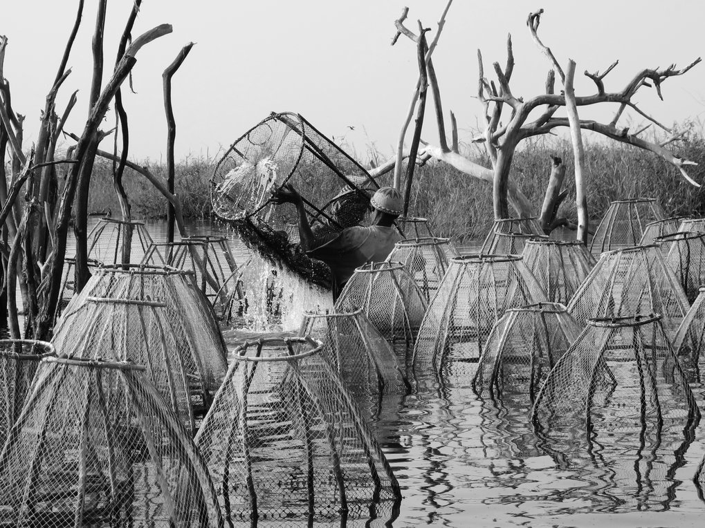 <p>Fishermen on Lake Chad. In the labyrinth-like islands along the Lake Chad shores, shallow waterways are stacked from side to side with fish traps, emptied in regular intervals.<br /><br />Photo: Florian Köhler, Lake Chad, near Bosso, Niger, 2011<br />Max Planck Institute for Social Anthropology</p>