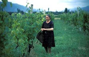 The Azerbaijani woman in the picture is using her right to collect as many leaves as she needs, for cooking stuffed grape leaves, from a vineyard, which belongs to her but is cultivated by someone else.