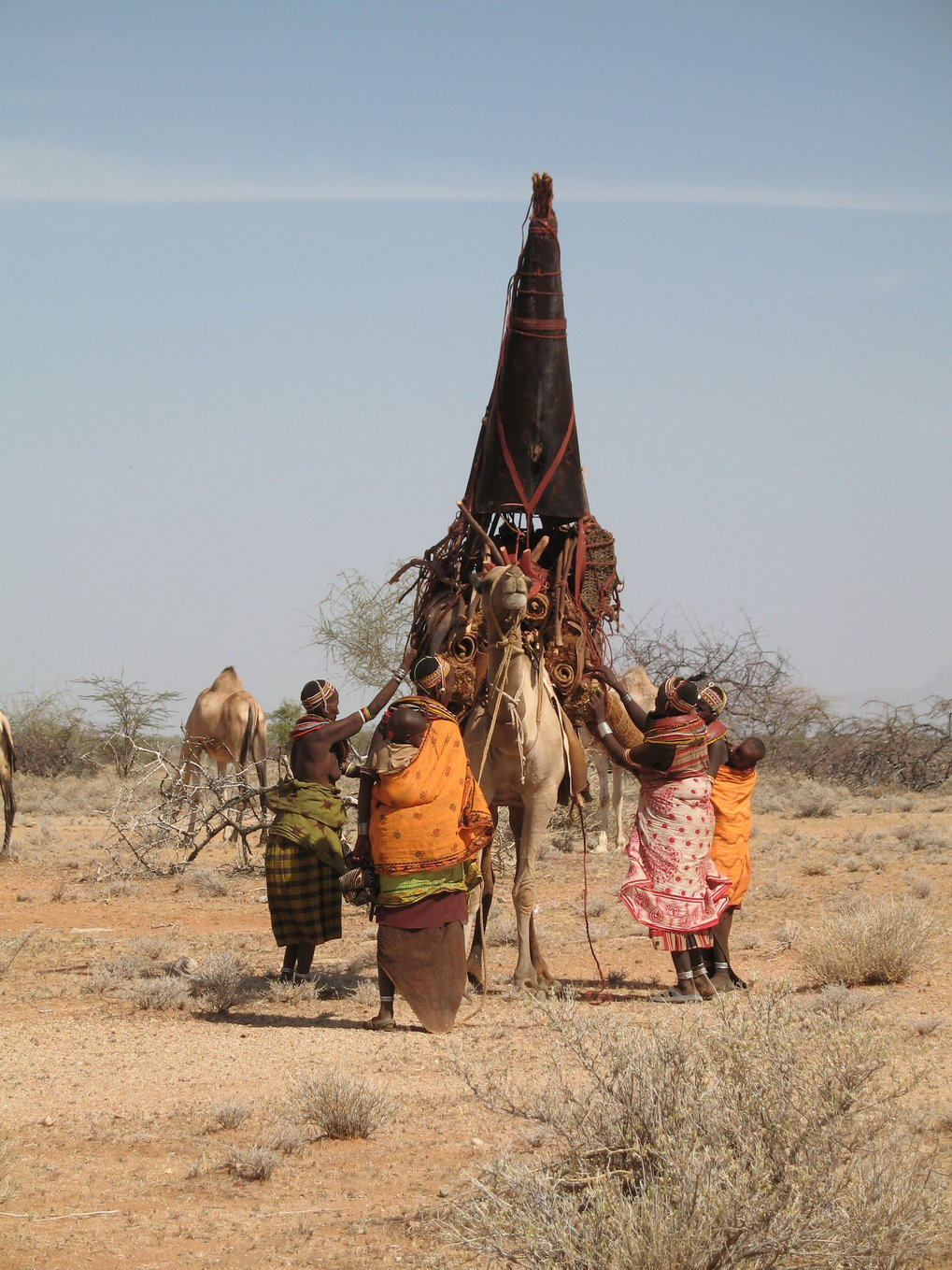Loading the camels, Rendille, Kenya, 2009